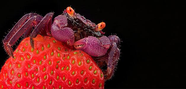 Вредители клубники – виды, признаки, методы борьбы