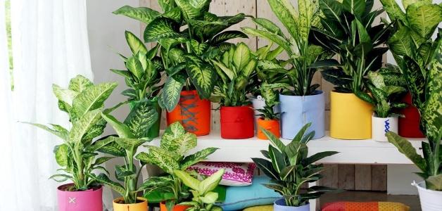 ядовитые комнатные растения для животных